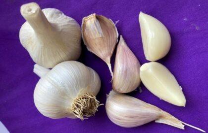 delafield garlic