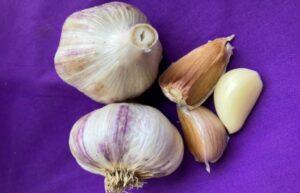Marino garlic