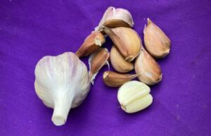 Salt spring garlic